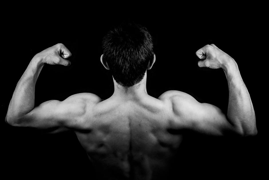 muscle building supplements arms